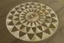 Crop designs / Crop designs