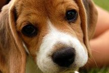 PUPPIES / by Leigh Ambrosino