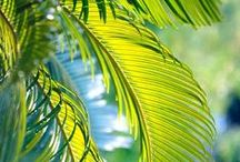 PALM leaf / by ~Mary G~