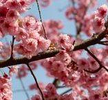 Printemps | Spring / Vive le retour des beaux jours !