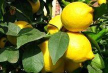 Bien-Etre et détails / Par les plantes ou par le développement personnel : http://devantsoi.forumgratuit.org/