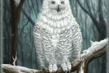 Les Animaux totem / Connaissez-vous déjà le vôtre ?? Sinon, pour ceux qui souhaiteraient le connaître / http://devantsoi.forumgratuit.org/t458-animal-totem