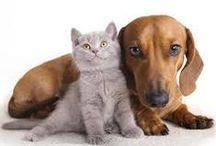 MESSAGES des ANIMAUX / la relation entre l'homme et l'animal revêt une grande importance, depuis toujours, et à tous les niveaux de la société. Les animaux sont présents partout dans la vie quotidienne, on en parle ici : http://francoise1.unblog.fr/