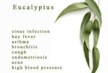 Wonders of Eucalyptus Oil