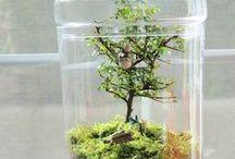 Terrariums / Vous cherchez des idées DIY pour votre terrarium ? Quelles plantes à l'intérieur de votre terrarium ? De la mousse, des cactus et des succulentes ? Dans un bocal géométrique ou à poisson ? Plutôt dans un pot fermé en verre ou en cristal suspendu ? Quelles quantité d'eau pour l'entretenir ? Tous nos conseils et astuces sont ici !