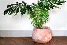 Plantes d'intérieur / Des plantes d'intérieur pour tous les goûts et tous les niveaux : dans la cuisine, la salle de bain ou la chambre, suspendue ou posée sur une étagère, tombante le long d'un mur, grimpante ou exotique, pour une deco bohème et originale, des plantes à l'entretien facile, pour des pièces sans lumières ou dans un bocal... Un tableau pour les amoureux des plantes vertes !