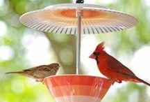 Oiseaux du jardin / Reconnaître les oiseaux du jardin hiver comme été ! Mésanges, merles, rouge-gorge, moineau, perruches, pie, tourterelle, verdier, pouillot véloce, tarin des aulnes, bouvreuil, fauvettes,... Amoureux des oiseaux, ce tableau est pour vous : du printemps à l'automne,  à l'abri sur une branche ou posé sur un nichoir près de la maison, nos conseils en nourriture, mangeoire, cabane deco pour nos amis à plumes !
