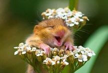 Live, Laugh, Love / It's been proven: Laughter is the best medicine...