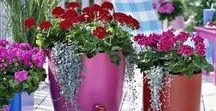 Jardinières et pots de fleurs / Les plus belles jardinières et pots de fleurs : originale, contemporaine ou récup, en palettes de bois, à l'intérieur ou sur un balcon ou une terrasse, sur un banc ou suspendue, pour Noël l'hiver ou en automne, pour les aromatiques ou pour des plantes d'intérieur....