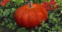Automne I Autumn / Fleurs et arbustes aux couleurs d'automne dans des beaux jardins. #automne #jardin #feuilles #septembre #octobre #novembre