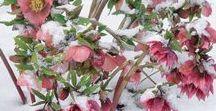 Jardin en Hiver / Le jardin est beau en hiver : neige, écorces colorées, arbustes à fleurs, houx pour la déco, branches de couleurs, givre. Découvrez les plus belles scènes de jardin en extérieur de décembre à février !