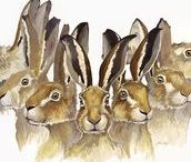 Hares, hares hares !