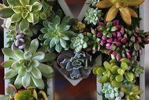 Plantas / Idéias super criativas de cultivar plantas!