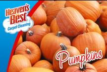 Everyting Pumpkin / I never imagined how many things you can make from pumpkin. Enjoy your holiday baking and leave your floor cleaning to Heaven's Best. They can clean your carpets, clean your tile and grout throughout your whole house, help your upholstery and leather furniture look like new and clean those lovely tapestry area rugs. Give Brad Beseth from San Marcos TX a call today for a cleaning estimate. 512-865-0092