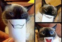 LOL and CUTE /  Funny LOL stuff. #humor #lol #funny #cute #pets