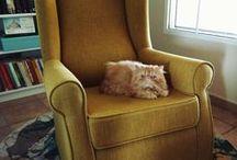 Gatos / Gatos y accesorios para ellos