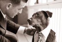 Wedding and Pets / Wedding ceremonies with animals and weddings with family pets.