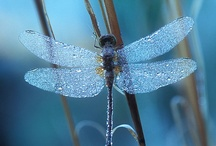 dragonfly / May you touch dragonflies and stars,dance with fairies and talk to the moon. / by Ruth Espinoza