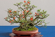 Art of Bonsai Trees / by Sherri Clenney