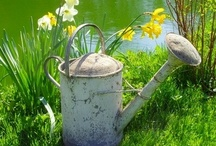 Watering Cans / by Sherri Clenney