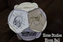 Horses and Education / Using horses to teach life skills and academic subjects can a fun way to grow and learn.