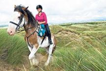 Equestrian Destinations / Interesting places to visit for horse enthusiasts.