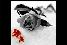 Roses - the novel / Things that are related to my novel 'Roses' - White Rose series book 1