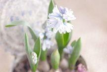 Flower / by Maria Angela Yanita