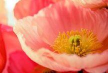 Flowers & Plantings
