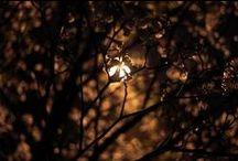 My Pictures ( Plants ) / Canon 7D