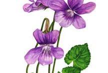 dessin peinture / images fleurs fruits