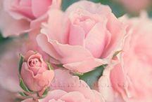അ Romance of Flowersഅ /   TEMPORARILY CLOSED DUE TO FAMILY ILLNESS.  BACK SOON.  THEMED floral board --exploring the  world of all the blossoms and gardens.   CURRENT THEME - Perfect pastel shades or roses