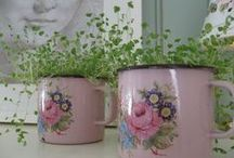 Country romantic <3 pink, rose