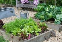 Garden - Vegetable Raised Beds