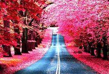 Kauneutta / Maailmassa monta on ihmeellistä asiaa - se hämmästyttää, kummastuttaa pientä kulkijaa.