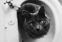 Cats photos / cat, cats, kitty, kittens, cats photos, cute cats