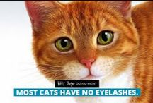 Amazing facts about cats / Did you know? Amazing facts about cats :)