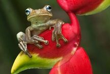 Chameleons and frogs