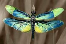 Dragonflies / by Dreamcatcher