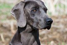 Dogs of All Breeds / My Dog Picks / by Teri Pennington