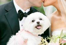 Chic Pets At Weddings