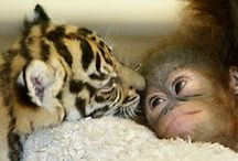 Made You Smile! / Cutest Animals Pictures
