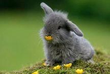 Animals  / Sweetness, cuteness, fluff and rainbows.