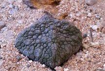 Pseudolithos