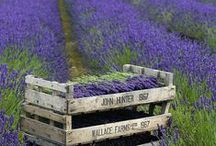 Love Provence