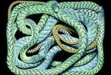 Snakes / Serpi