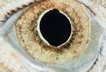 Eyes / Oeil