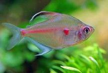 Fish / Aquascaping, fish and tanks