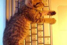 Kitty ^. .^