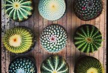 Cactus / Prickly and awesome